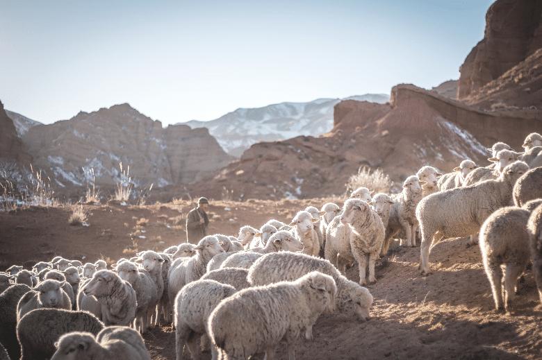 lamb passover